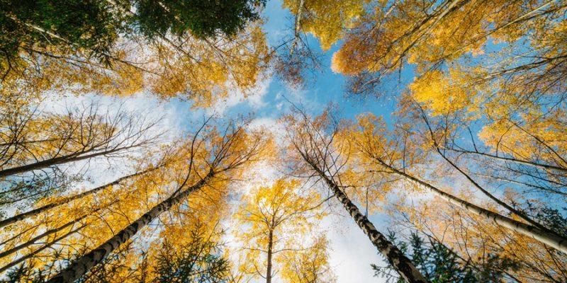 Bos-met-herfstkleuren-in-Lapland