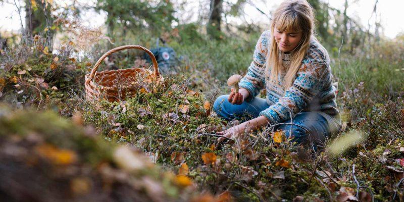 Champignons plukken in het bos in Lapland
