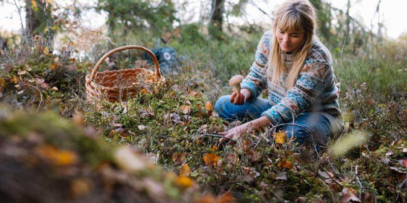 Champignons-plukken-in-het-bos-in-de-nazomer