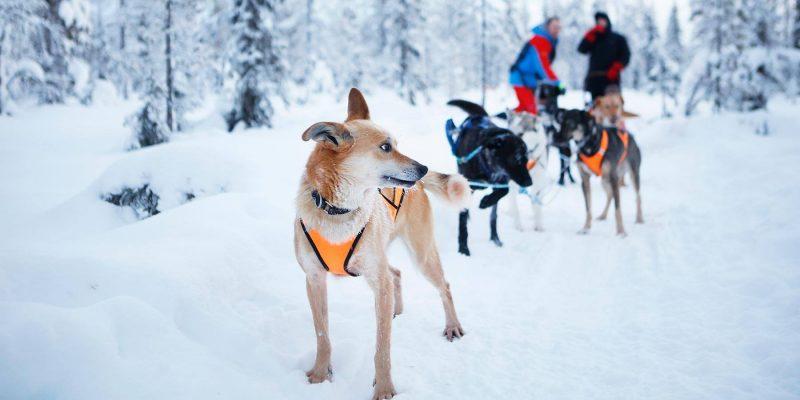 Doe mee aan een huskytocht met de gidsen van de aurora mountain lodge