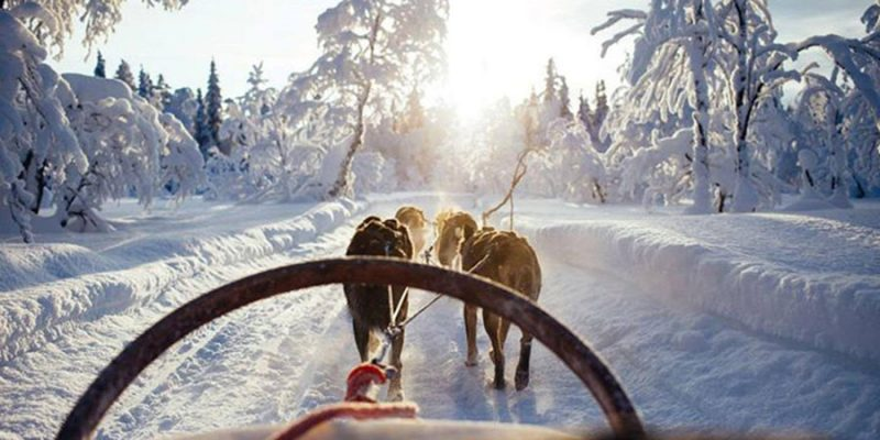Huskytocht in Lapland in winter wonderland
