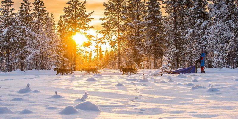 Lapland: Huskytochten door winter wonderland