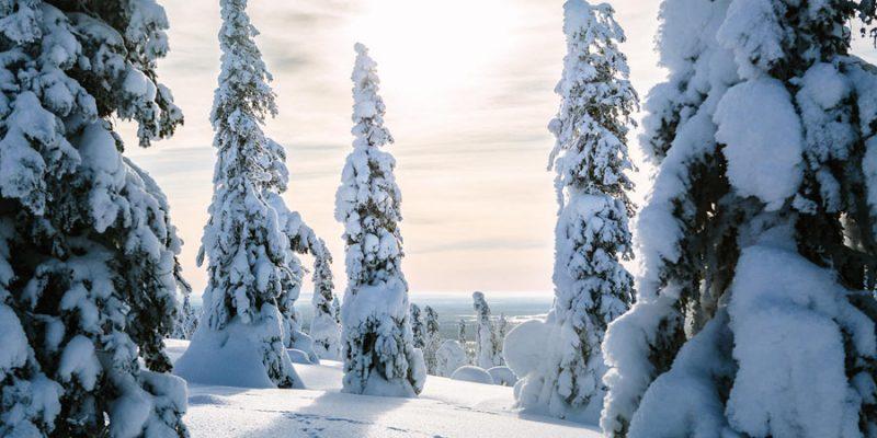 Landschap Finland in de winter