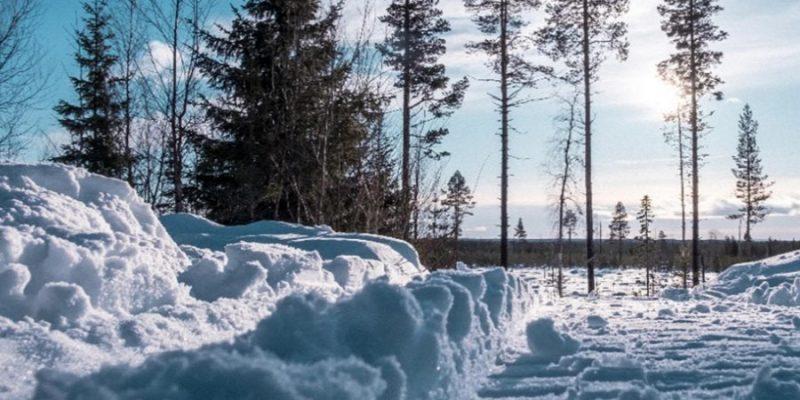 Landschap van Lapland in februari als de sneeuw van de bomen valt