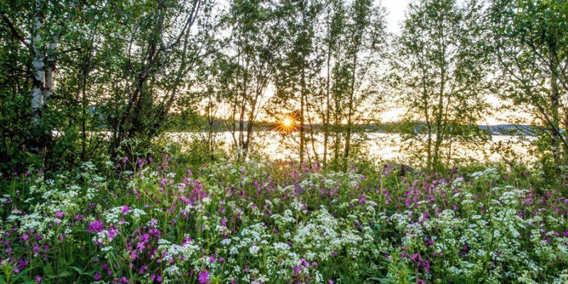 Midzomer-in-Zweden-zon