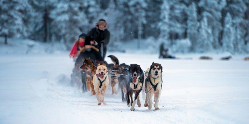 Tromso-huskytocht