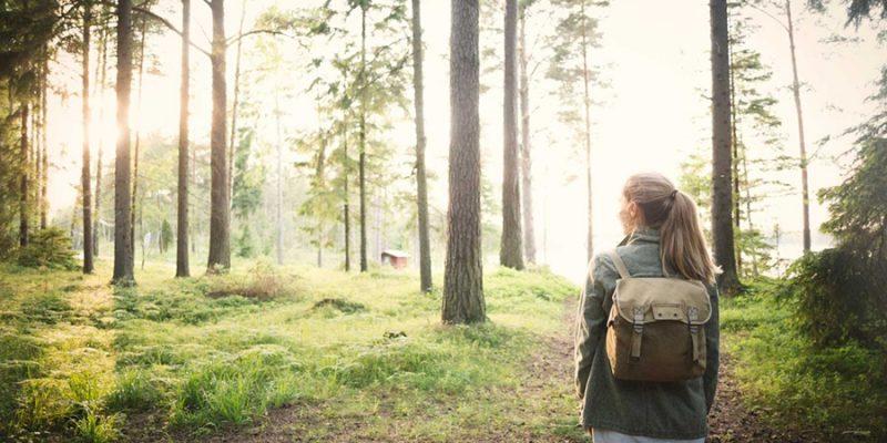Zweden-zomer-wandelen-in-het-bos