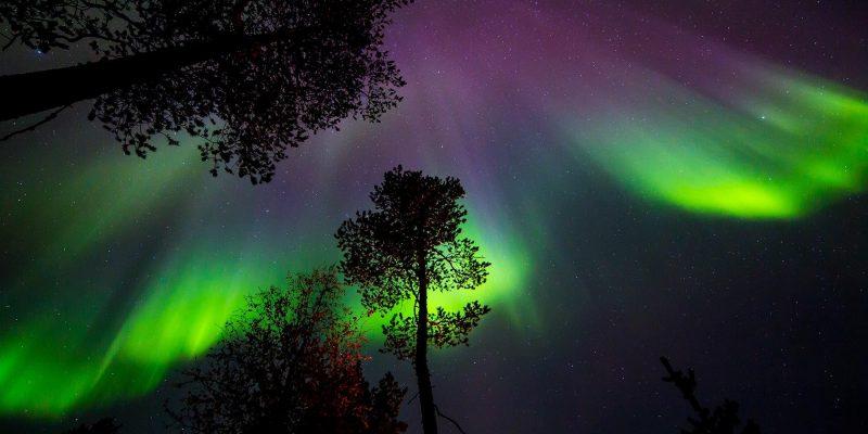 Noorderlicht-boven-de-bomen-in-Lapland