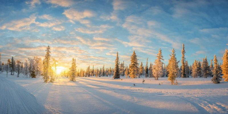 Reizen naar Lapland met Nordic met sneeuw op boomtoppen
