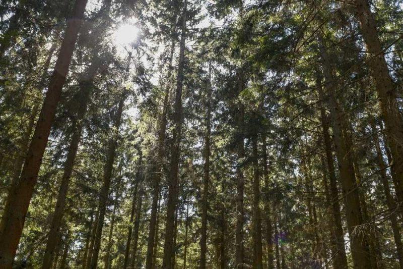 Gribskov bos in Denememarken reizen met Nordic
