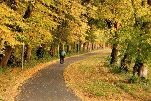 Herfstkleuren net buiten Kopenhagen in Denemarken