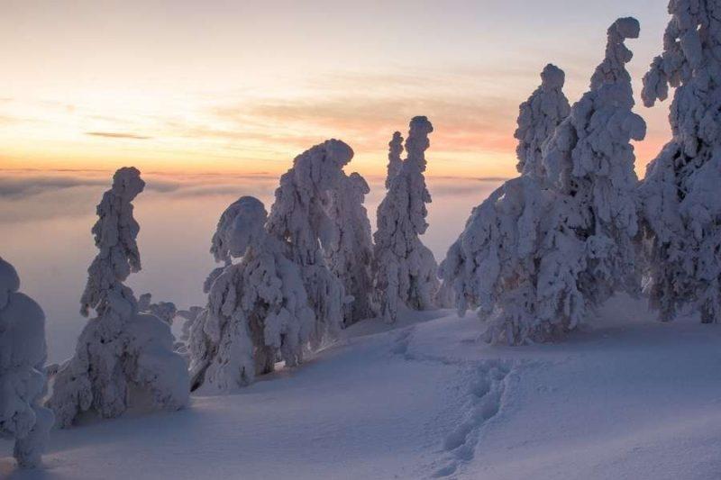 Landschap met sneeuw in Lapland reizen met Nordic