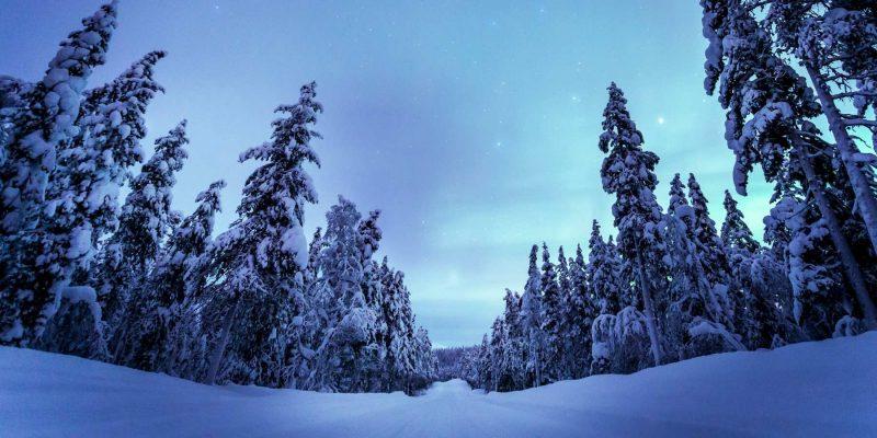 Noorderlicht in Lapland sneeuw op bomen Nordic