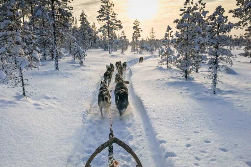 Rijden met de huskys in Lapland met Nordic Nederland