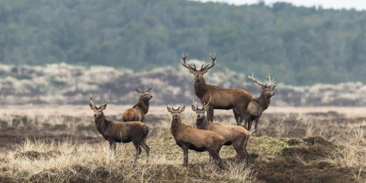 Wildlife-in-Thy-Nationaal-Park-naar-Denemarken-met-Nordic-1