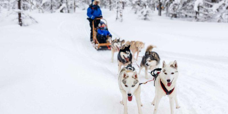 Rijden op een huskyslede door winters Lapland