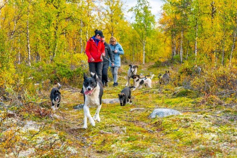 Husky-hike-in-Lapland-naar-Lapland-met-Nordic-©Micke-Tornqvist-ETN-800x533