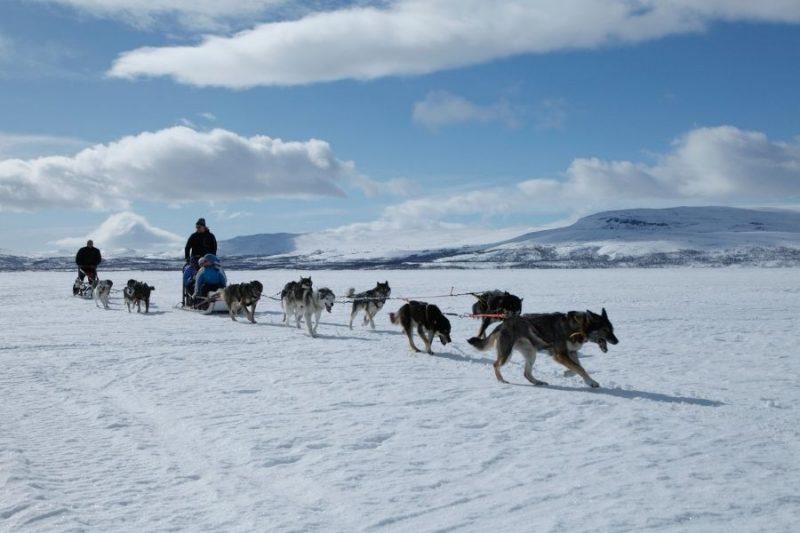 Huskydachtocht-naar-Winters-Lapland-met-Nordic-800x533