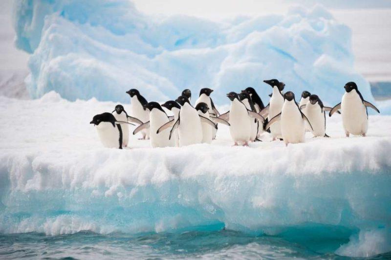 Pinguins-spotten-op-Antarctica-met-Nordic