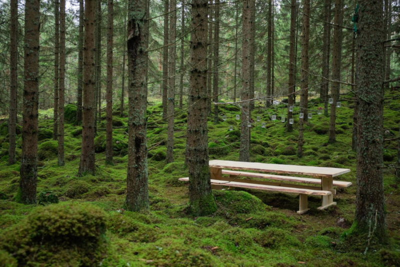 Diner tafel in de natuur Zweden